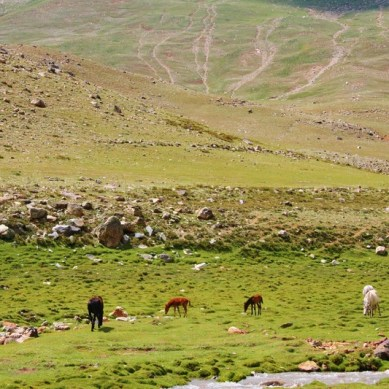 Locals form a committee to resolve centuries old conflict over pasture and grazing land in Jughor, Chitral