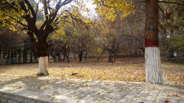 autumn-in-gilgit-city-1
