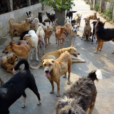 Kill 100 stray dogs, Get 10,000 as a reward