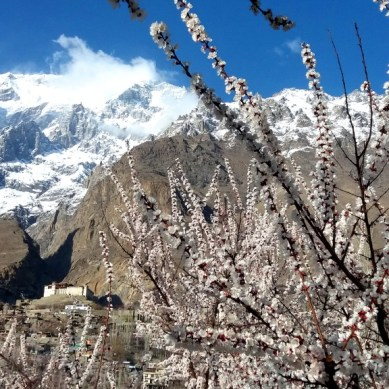 15 stunning photographs of spring blossom in Karimabad, Hunza