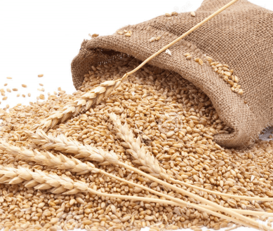 ECC decides to reduce wheat subsidy for Gilgit-Baltistan by 2 rupees per kilogram