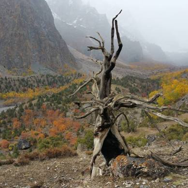 Pictorial: 14 beautiful photographs of Autumn, and Yaks, in Kunda Hel, Gojal
