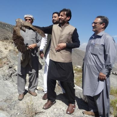 Wildlife officials free Falcon in Chitral, fine three hunters