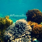 Karimunjawa Island Tour Package