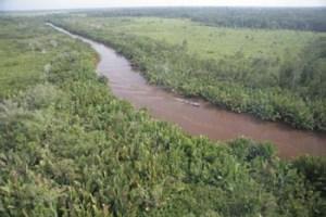 Orangutan Tour Tanjung Puting Sekonyer River