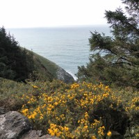 Heceta Lighthouse and Sea Lion Caves