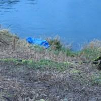 Oregon Beavers - Alsea River