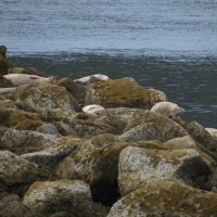 Fishing off the South Jetty - Newport, Oregon