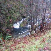 Fall Creek - Chinook Run