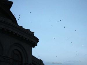 Birds by Yerevan Opera house Armenia
