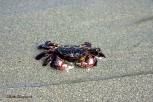 crab Salt Creek County Park