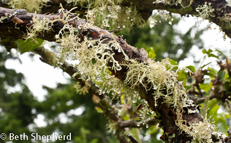 Raindrops on moss and lichen