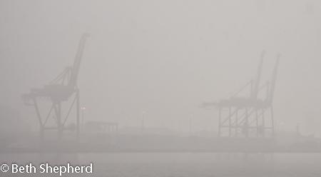 cranes mist seattle