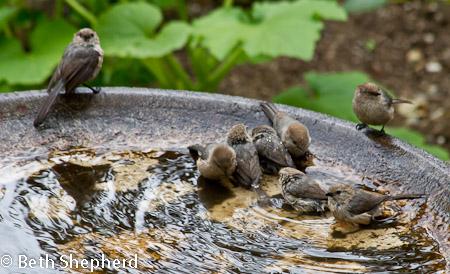 Eight little birds