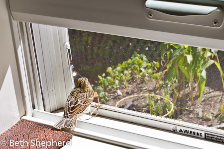 Bird in the house 3