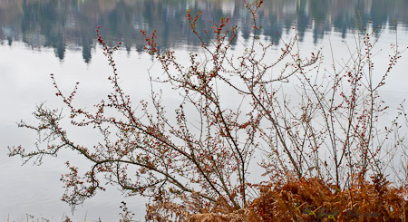 Berries by the water's edge