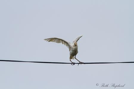 Dance of the white crane