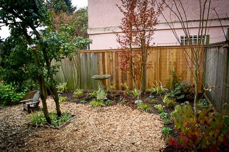 Garden last fall