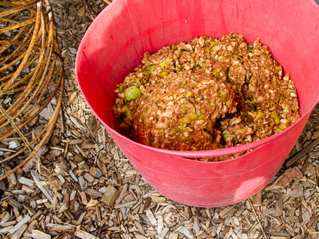 Ground apples for cider