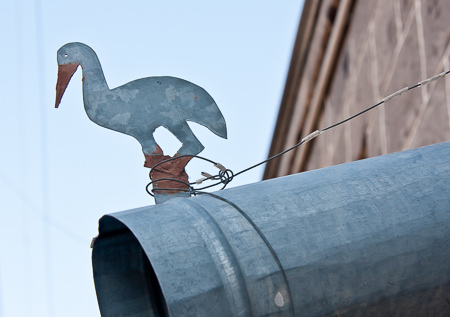 Heron on downspout