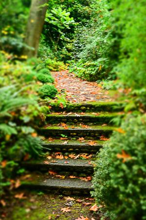 Secret stone stairway