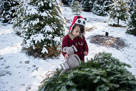 Christmas tree hunting 2014 bunny