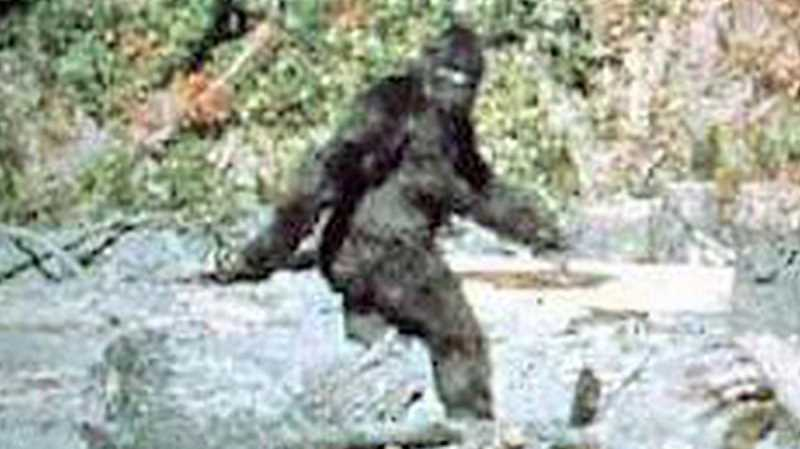 CONTRIBUTED PHOTO: PATTERSON-GIMLIN VIDEO - The most famous image of Bigfoot comes from frame 352 of the well-known Patterson-Gimlin video showing a female Bigfoot, which has never been debunked.