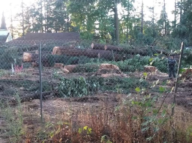 Image result for Jennings Lodge trees cut