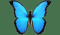 butterfly-emoji-domain-iphone-ios-png-favpng-LX4ACPCttQzh2qt5a0Yk49V72