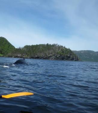 Humpback Whale by Alanna Jorgensen