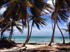Palm trees on the beach, Caye Caulker