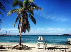 Junkanoo Beach palm tree