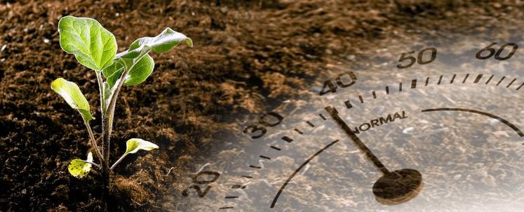 زراعة اشتال الباذنجان