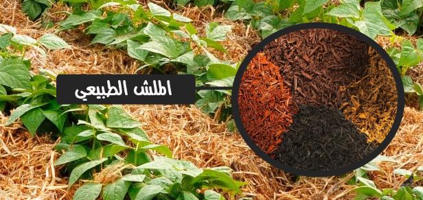 مغطاة التربة الملش
