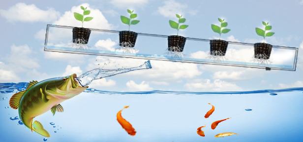فوائد ماء السمك للنباتات