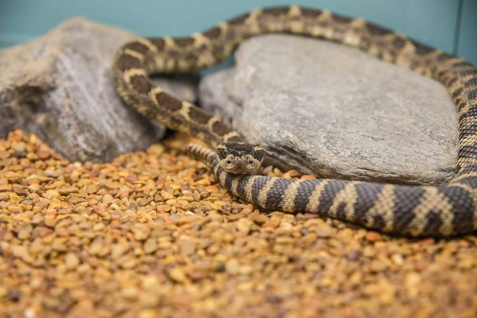 Reptile Gardens, Rapid City, South Dakota