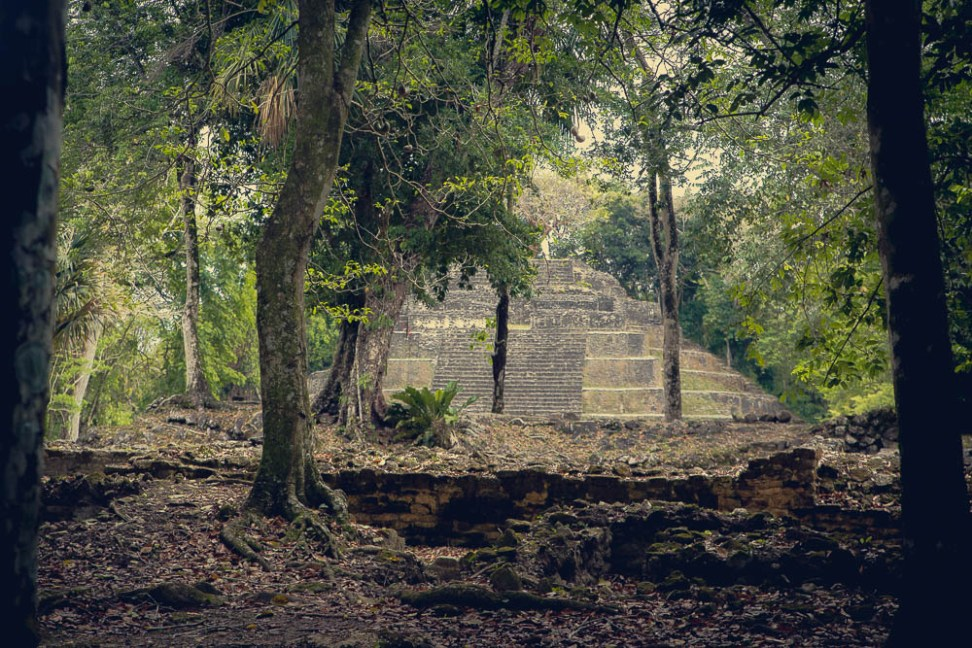 A glimpse of an ancient ruin through the jungle.