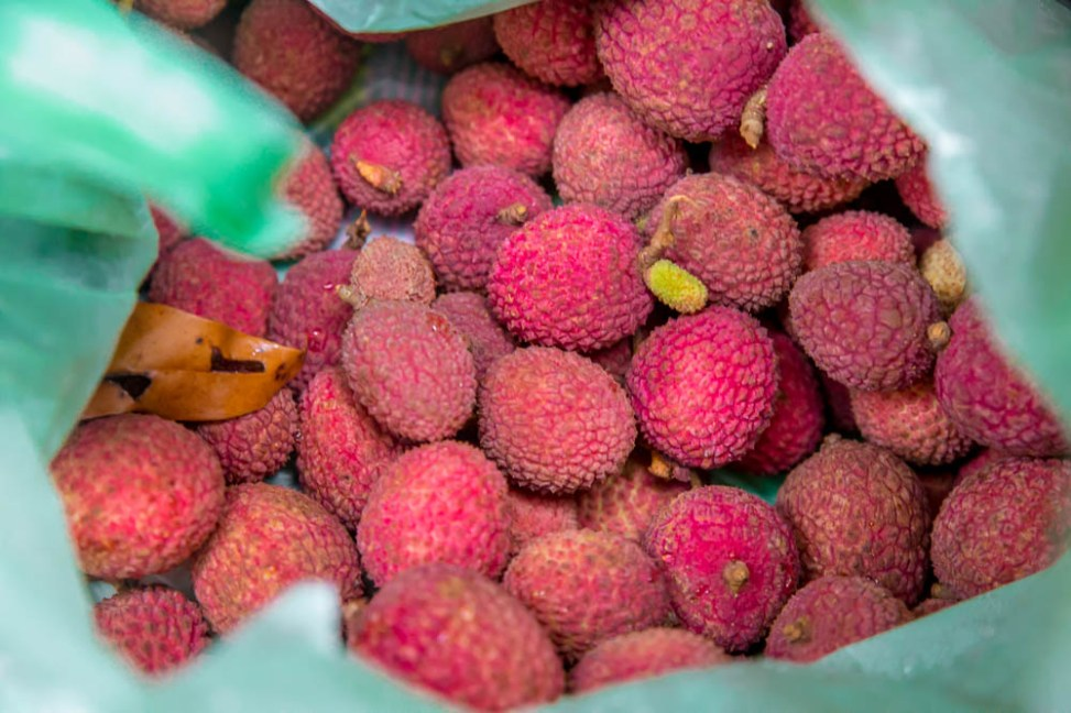 Better than the cup of Nescafe that was on offer. Freshly picked lychees.
