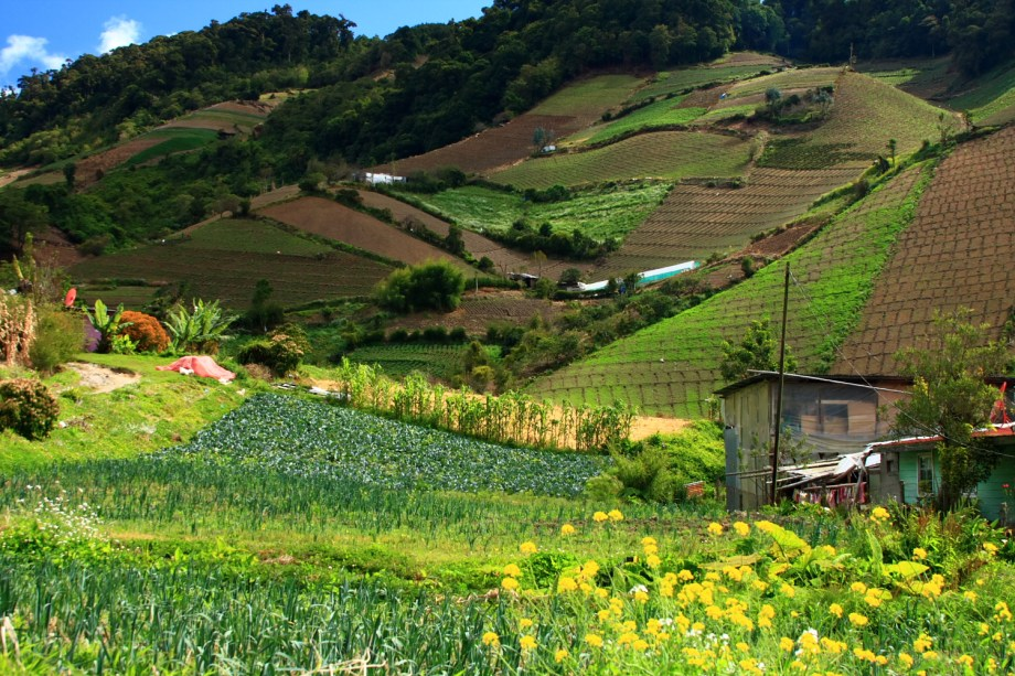 Image result for panama vegetable crops