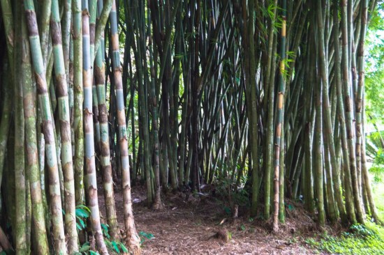 You will find a lot of different areas that have tall bamboo shoots
