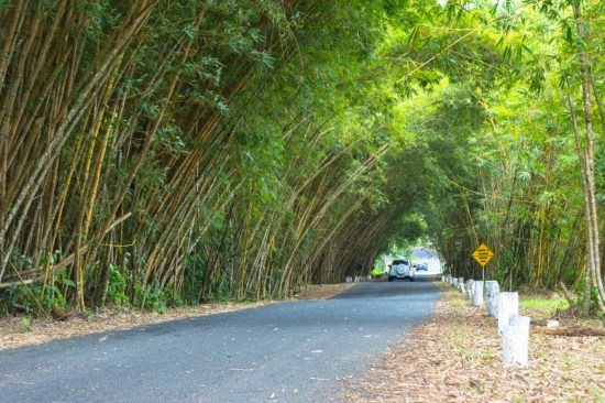 This is the road that leads up to the Gamboa Rain Forest Resort.