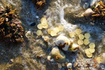 The Valuable Treasures Buried Under the Waters of Caribbean Sea