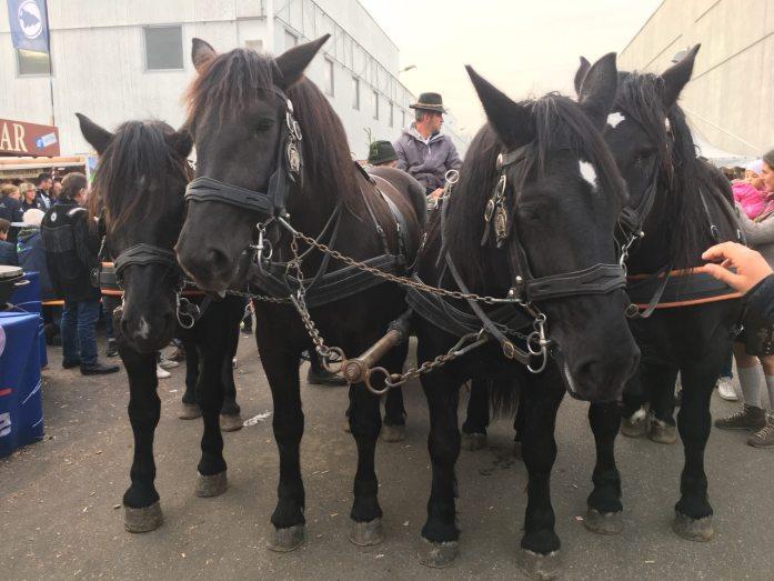 Fiera cavalli Verona 2017