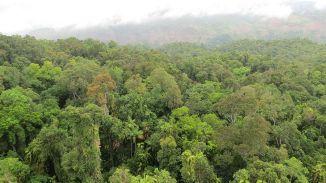 25. daintree rainforest