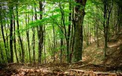 88.foresta faggi