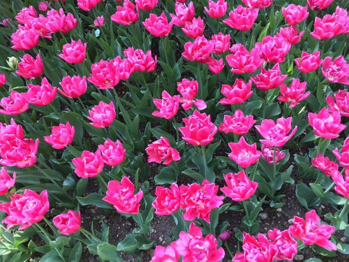 dove vedere la fioritura in veneto