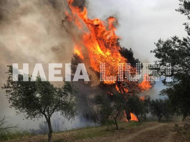 Πύρινη λαίπαλα σε Ηλεία και Αρκαδία – Καίγονται σπίτια! (vids)   panathinaikos24.gr