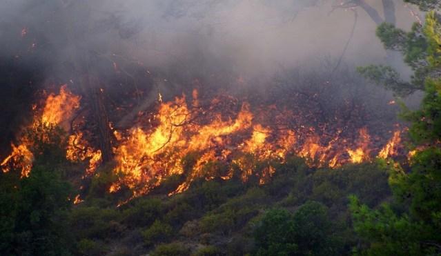 ΦΩΤΙΑ ΤΩΡΑ: Πυρκαγιά Μαραθώνα – Συναγερμός στην Πυροσβεστική | panathinaikos24.gr