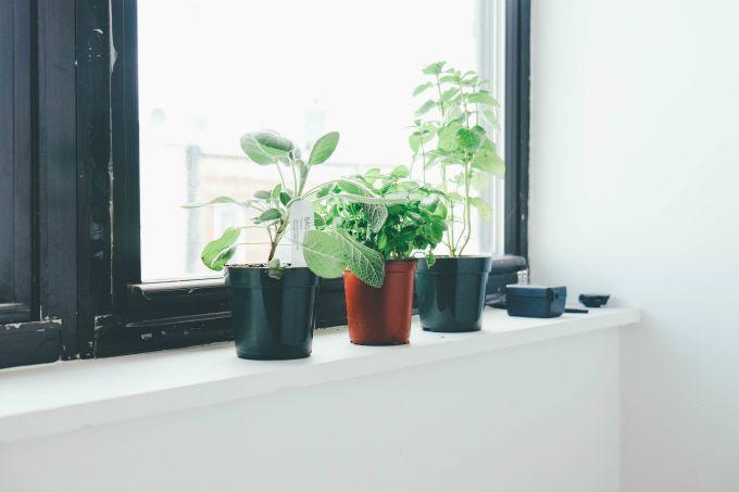 plants (3 of 10)
