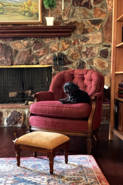 A black Shih Tzu sits on a muted, dark red tufted armchair.